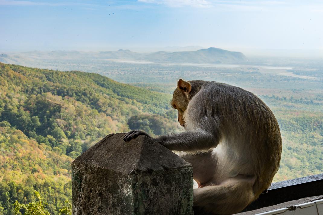 Mount Popa Monkey View