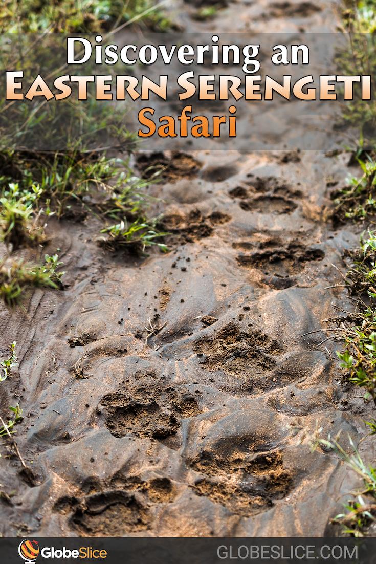 Serengeti Safari Pinterest Pin