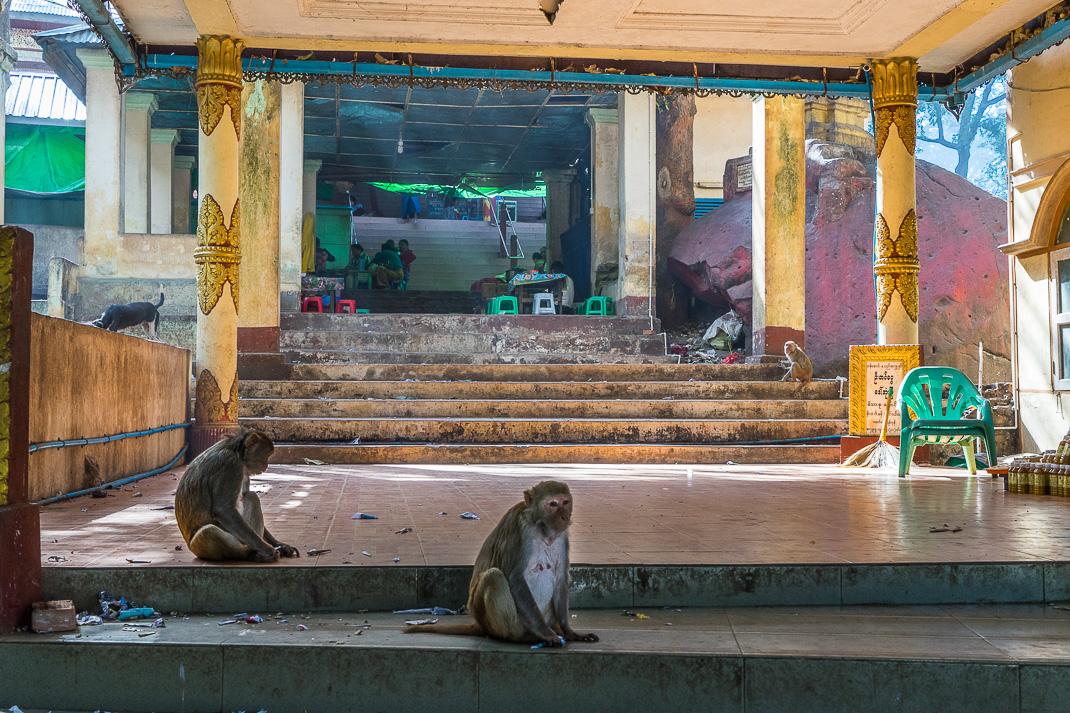 Mount Popa Stairway Monkeys